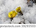 花朵 花 花卉 39293503