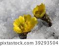 花朵 花 花卉 39293504