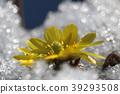 花朵 花 花卉 39293508