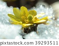 花朵 花 花卉 39293511