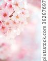 ดอกซากุระบาน,ซากุระบาน,ฤดูใบไม้ผลิ 39297697