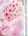 ดอกซากุระบาน,ซากุระบาน,ฤดูใบไม้ผลิ 39297698