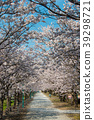 cherry blossom, cherry tree, yoshino cherry tree 39298721