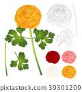 ranunculus flower background 39301209