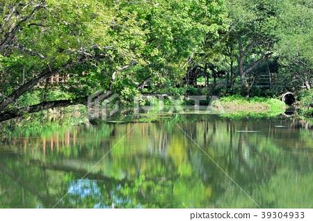美麗的鄉村水塘在台灣寶山鄉寶山鄉油田村雞油凸的農塘步道 39304933