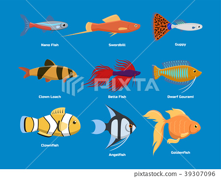 Exotic tropical aquarium fish different colors 39307096