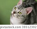 小猫 猫咪 猫 39312302