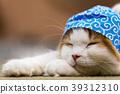 고양이 이야기 39312310