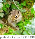 다람쥐 이야기 39313399