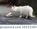 动物 猫 猫咪 39323384