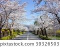 벚꽃길 39326503