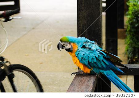 會講話的鳥 金剛鸚鵡 生態公園 39327307