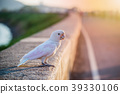 Parrot, lovely bird, animal and pet at park 39330106
