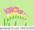 小蒼蘭 花朵 花 39333269