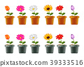 Different types of flowers in pots 39333516