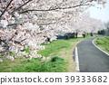 cherry blossom, cherry tree, yoshino cherry tree 39333682