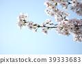 櫻花 櫻 賞櫻 39333683
