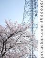 櫻花 櫻 賞櫻 39333687