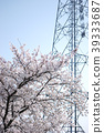 cherry blossom, cherry tree, pylon 39333687