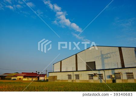 藍天白雲下的金黃稻田 39340683