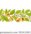 nutmeg, vector, branch 39341901