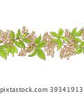 elderberry, branch, pattern 39341913