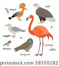 flamingo, hoopoe, bald 39350282