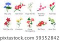 Organic nature botanic garden flower collection 39352842