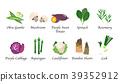 Organic nature health vegetable food spice vector 39352912