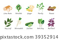 Organic nature health vegetable food spice vector 39352914