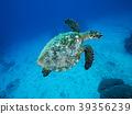 海龟 绿海龟 玳瑁海龟 39356239