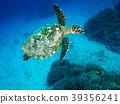 海龟 绿海龟 玳瑁海龟 39356241