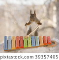 red squirrel holding sticks with a Xylophone 39357405