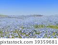 꽃밭, 네모필라, 미하라시의 언덕 39359681