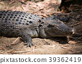 animal, animals, reptile 39362419