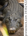 animal, animals, reptile 39362422