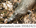 animal, animals, reptile 39362423