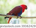 animal, animals, avian 39362429