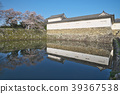 Cherry Blossom Hikone Castle 39367538