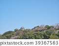Cherry Blossom Hikone Castle 39367563