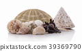 Sea shell on a white background. Clipping Path 39369790