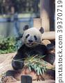 熊猫 竹叶草 动物 39370719
