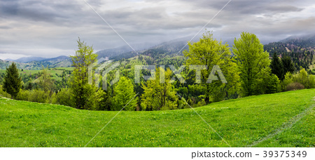 panorama of grassy hillside above the forest 39375349