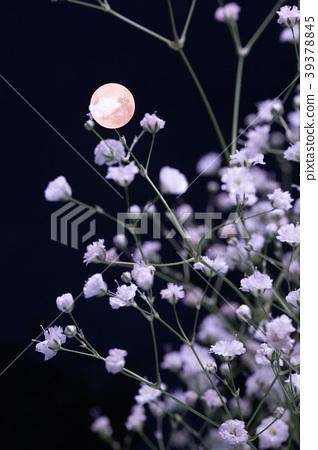 滿月和朦朧的草。它是多次曝光的圖像。 39378845