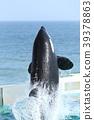 逆戟鲸 39378863