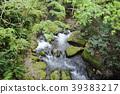 Mountain stream 39383217