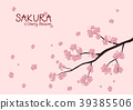 Sakura, Pink Cherry blossom background. 39385506