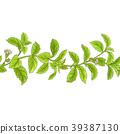 stevia, leaf, rebaudiana 39387130
