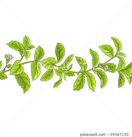 stevia branch vector pattern 39387130