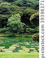 botanic, botanical, pond 39396371